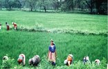 Small_list_wom-farmers-2